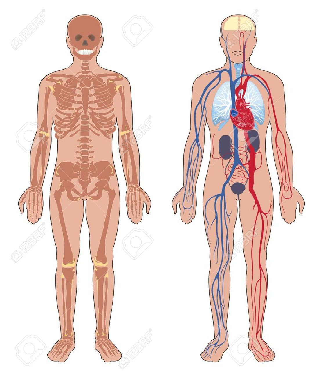 Anatomy and Anatomical disorders Photo