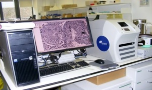 E-pathology Photo
