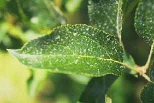 Plant Pathology Photo