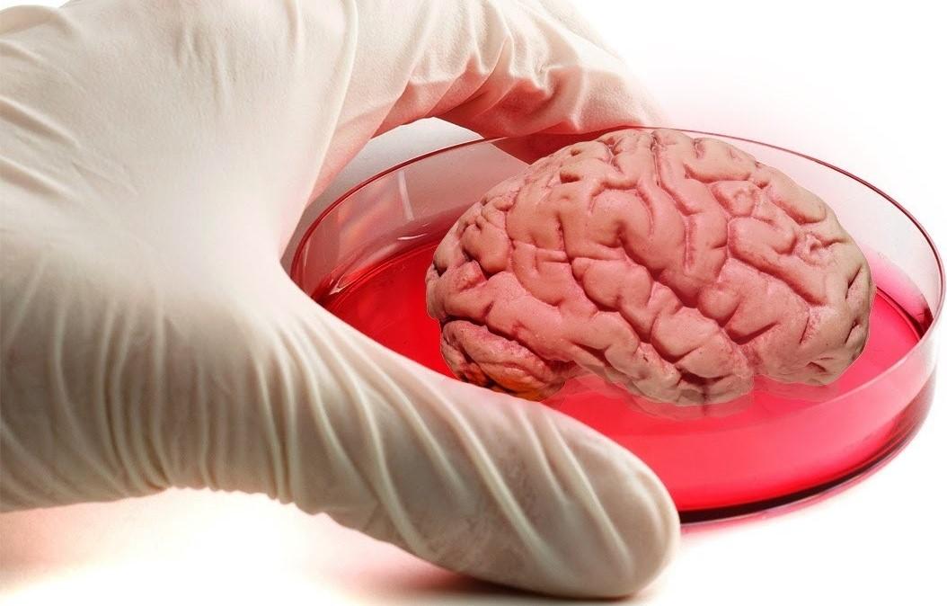 Regenerative Medicine Photo