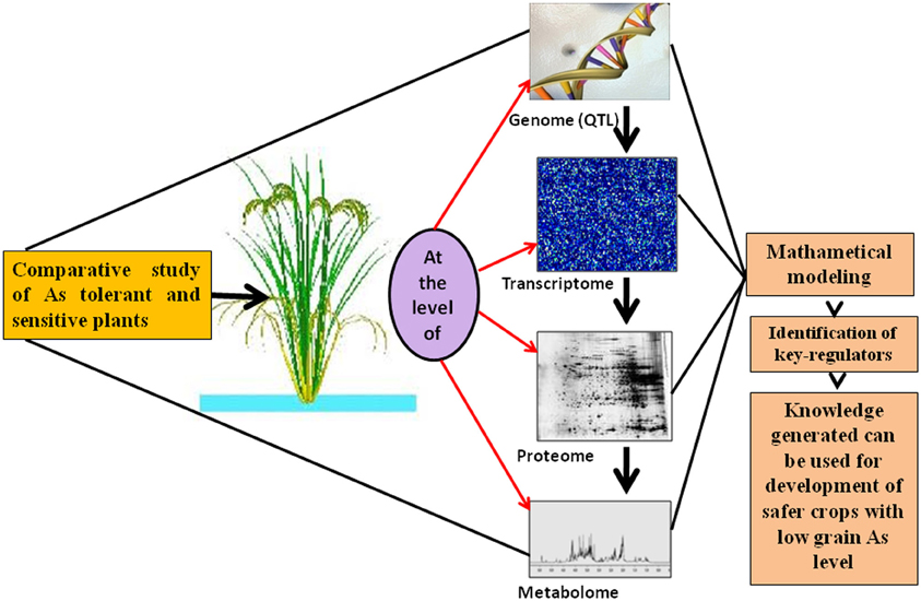 Plant Proteomics Photo