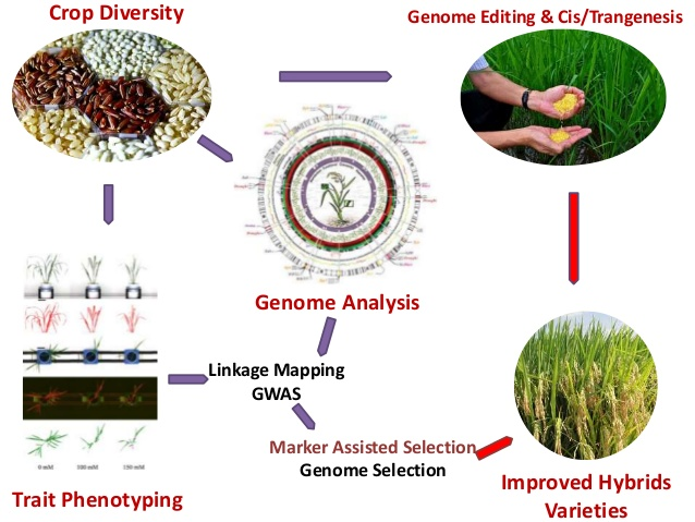 Plant Genomics Photo