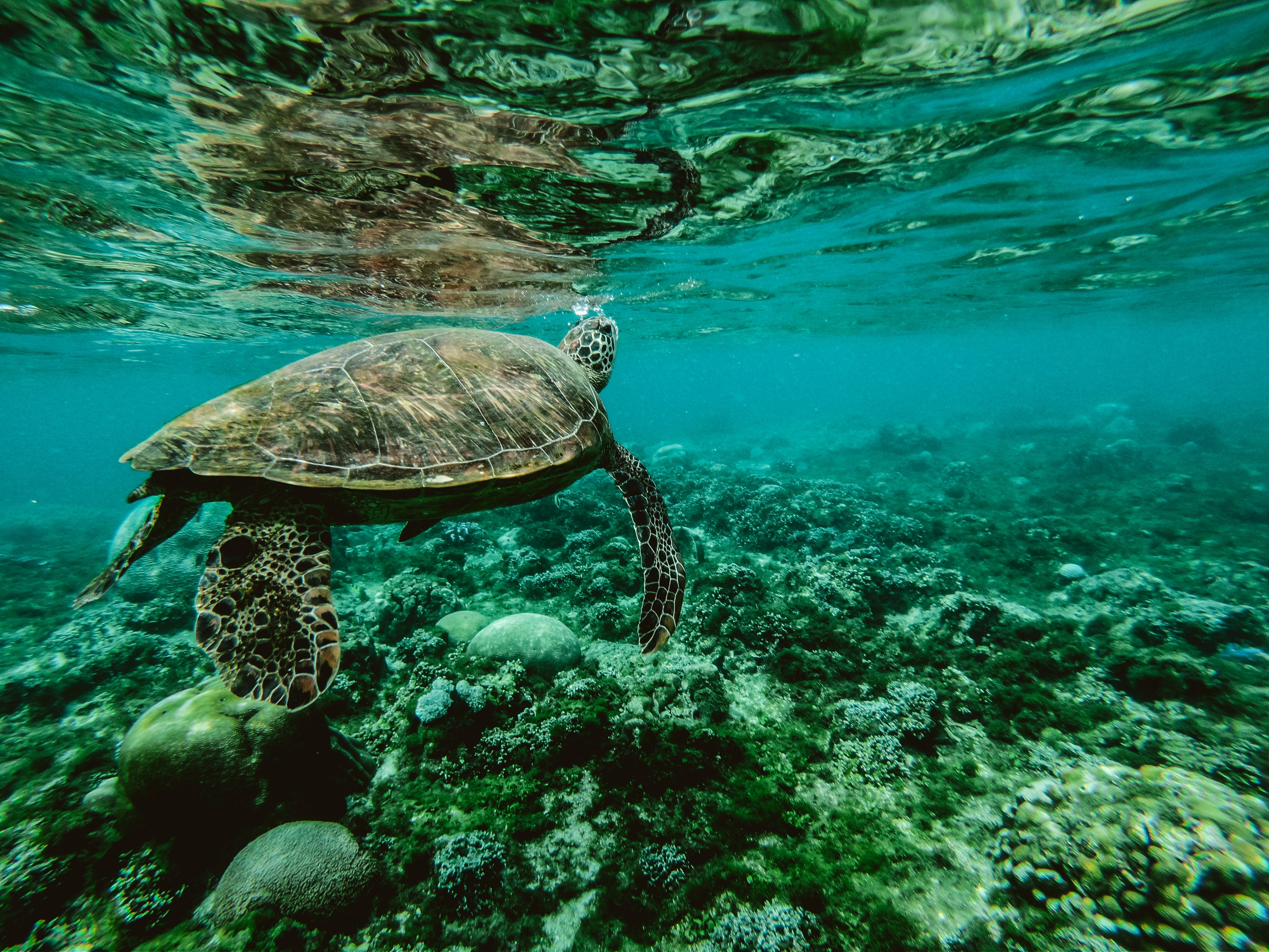 Climate Change and Impact on Marine World Photo