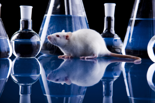 Biomedical Research Photo