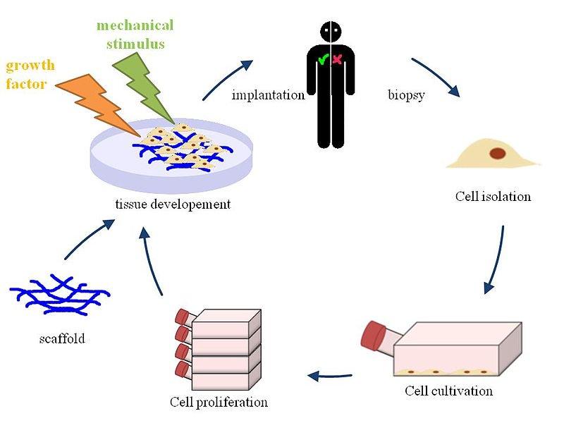 Tissue Engineering and Regeneration Medicine Photo