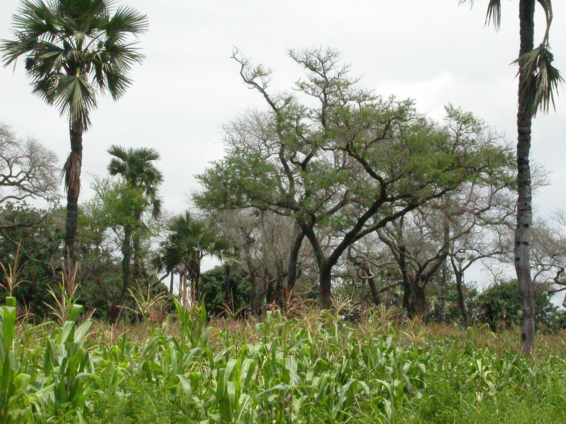Agroforestry Photo
