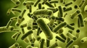 Probiotics Photo