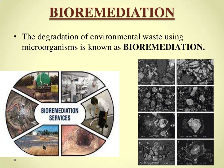 Bio Remediation|Green Energy Conference | Green Energy