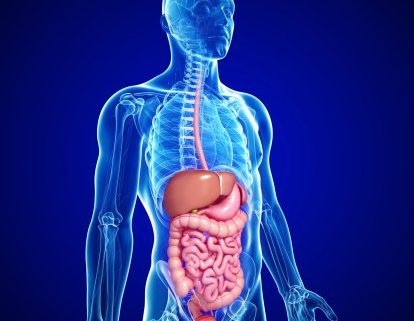 Gastroenterology Photo