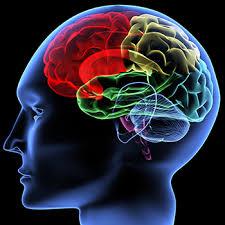 Neuro Psychology Photo