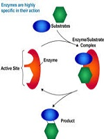 Enzyme Kinetics in Structural Biology Photo