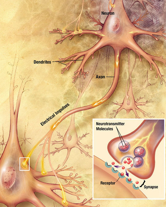 Chemical signalling in CNS Photo