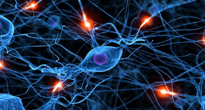 Neurotransmission and Neurochemical Interactions Photo