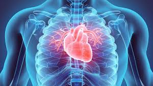Cardiovascular Disease  Photo