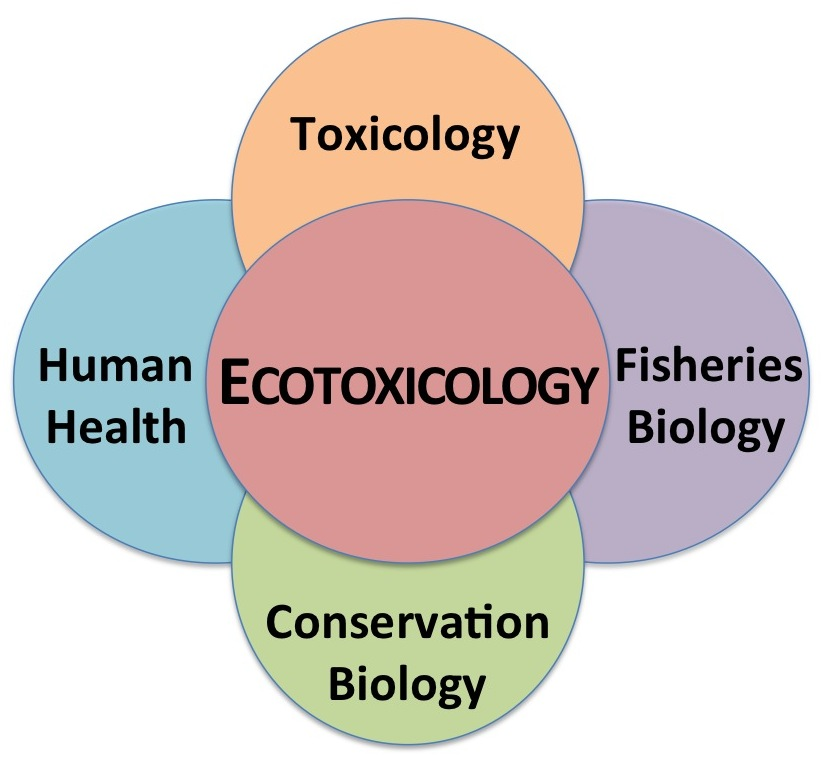 Ecotoxicology Photo