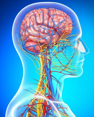 Neurology Photo