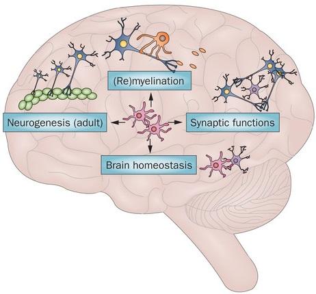 Neural Development  Photo