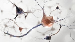 Neuroscience Nursing Photo