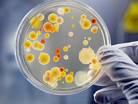 Clinical Microbiology  Photo
