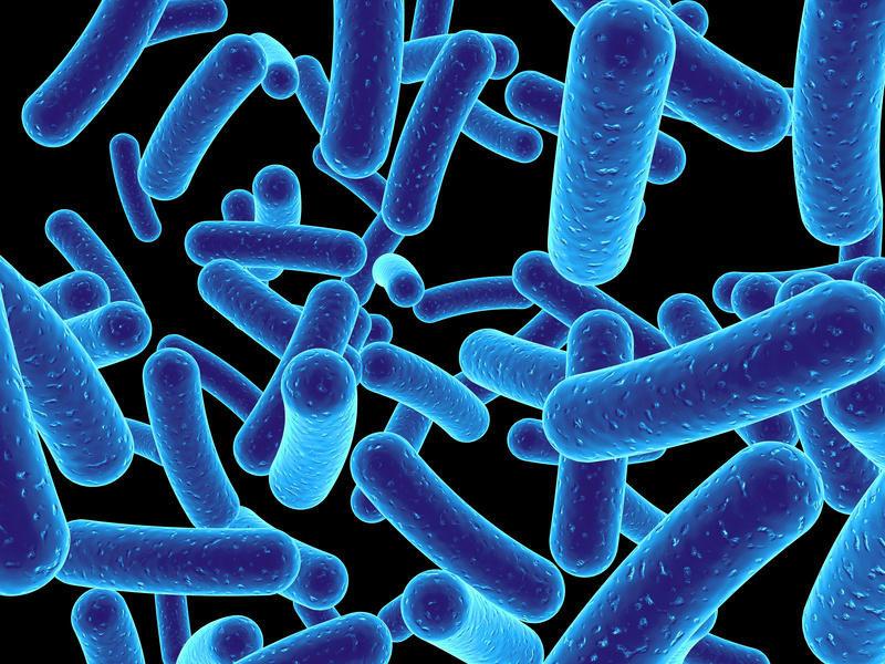 Cultured Bacteria Photo