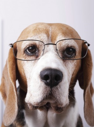 Veterinary Ophthalmologist Photo