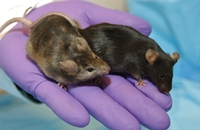 Clinical Trials in Animals Models Photo