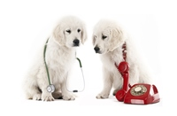 Veterinary Vaccines Photo