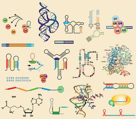 Molecular Biology & Transcriptomics Photo