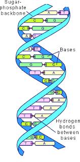 Recombinant DNA technology Photo
