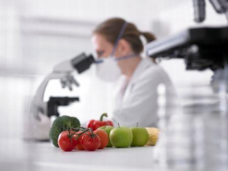 Food Microbiology Photo