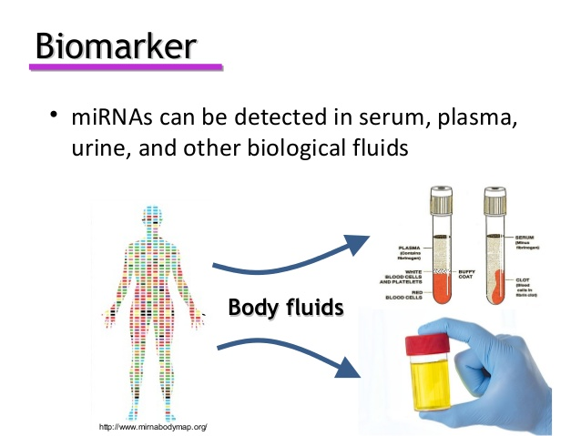 Biomarkers in Alzheimers  Photo
