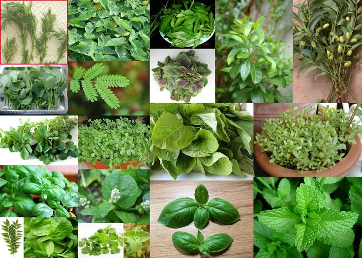 Image result for images of plants of herbal