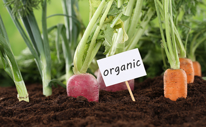 Organic Agriculture Photo
