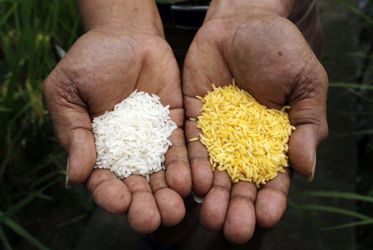 Genetically Modified Food Photo