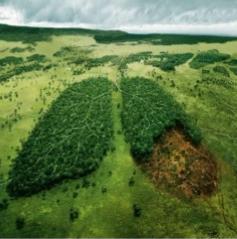 Environmental Toxicology Photo