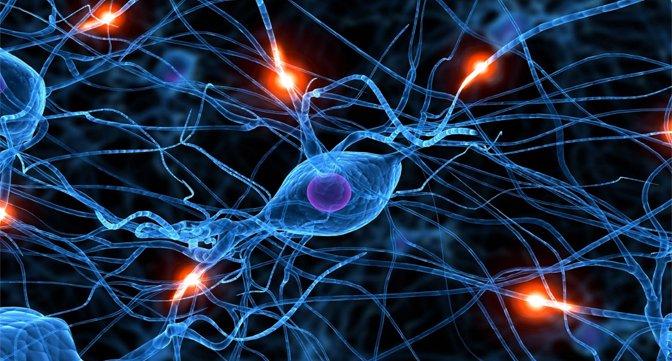 Neuropathology  Photo