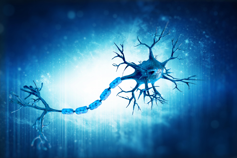 Neuroscience Photo