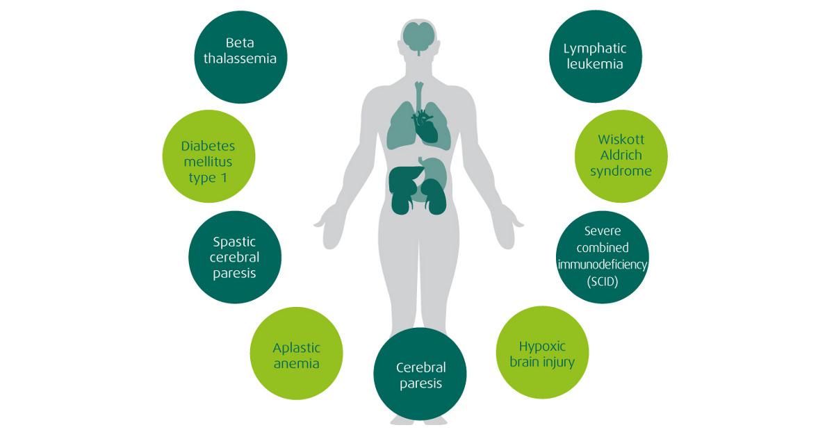 Application of Stem cells and Regenerative Medicine Photo