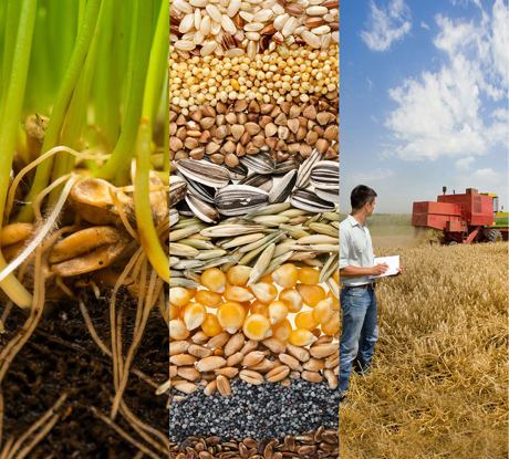 Agronomy Photo