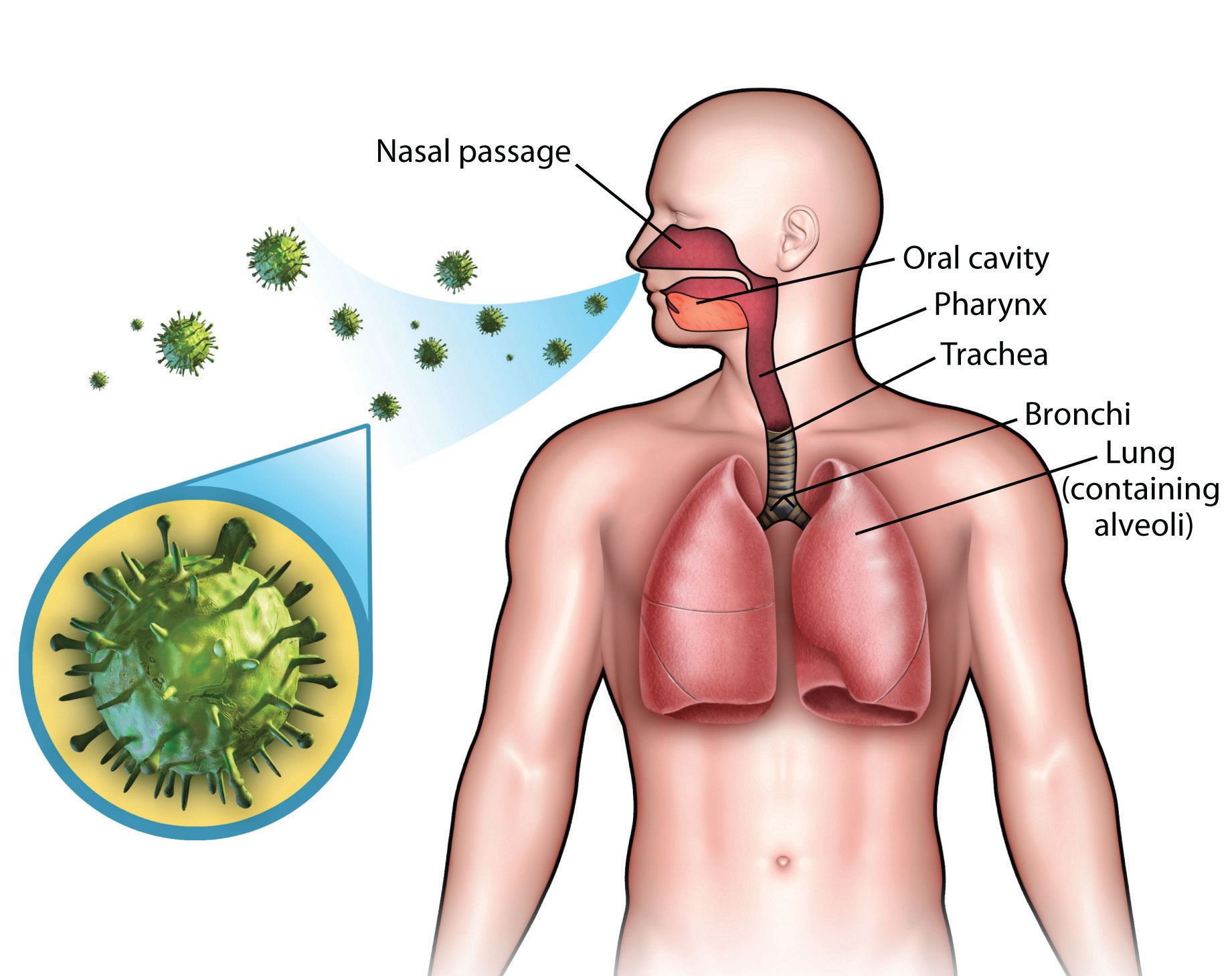 Respiratory Infectious Diseases and Therapy Photo