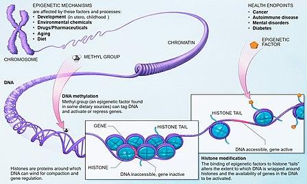 Epigenetics Photo