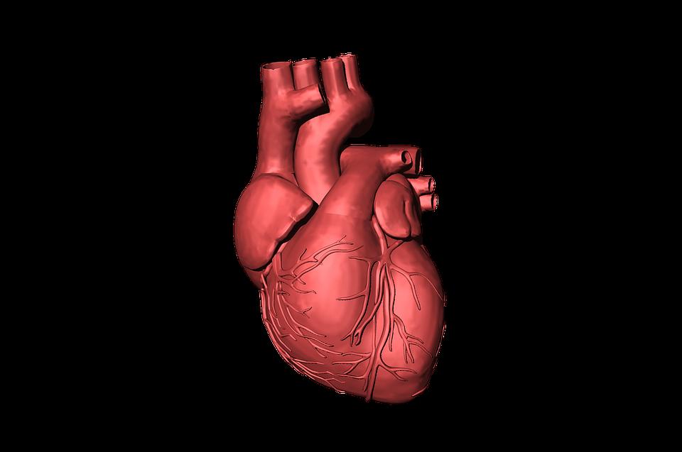 Cardiac Surgery Photo