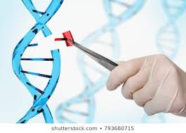 Genetic Engineering and Stem Cells Photo