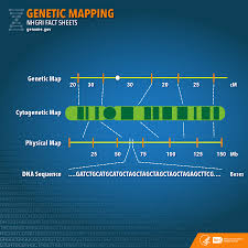 Genetic Mapping. Photo