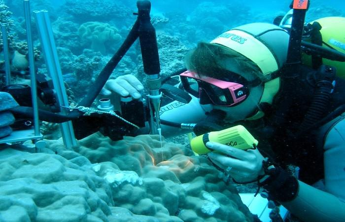 Marine Biotechnology Photo