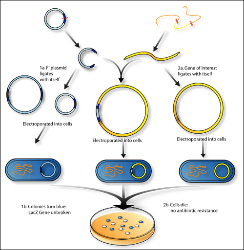 Recombinant DNA technology Photo