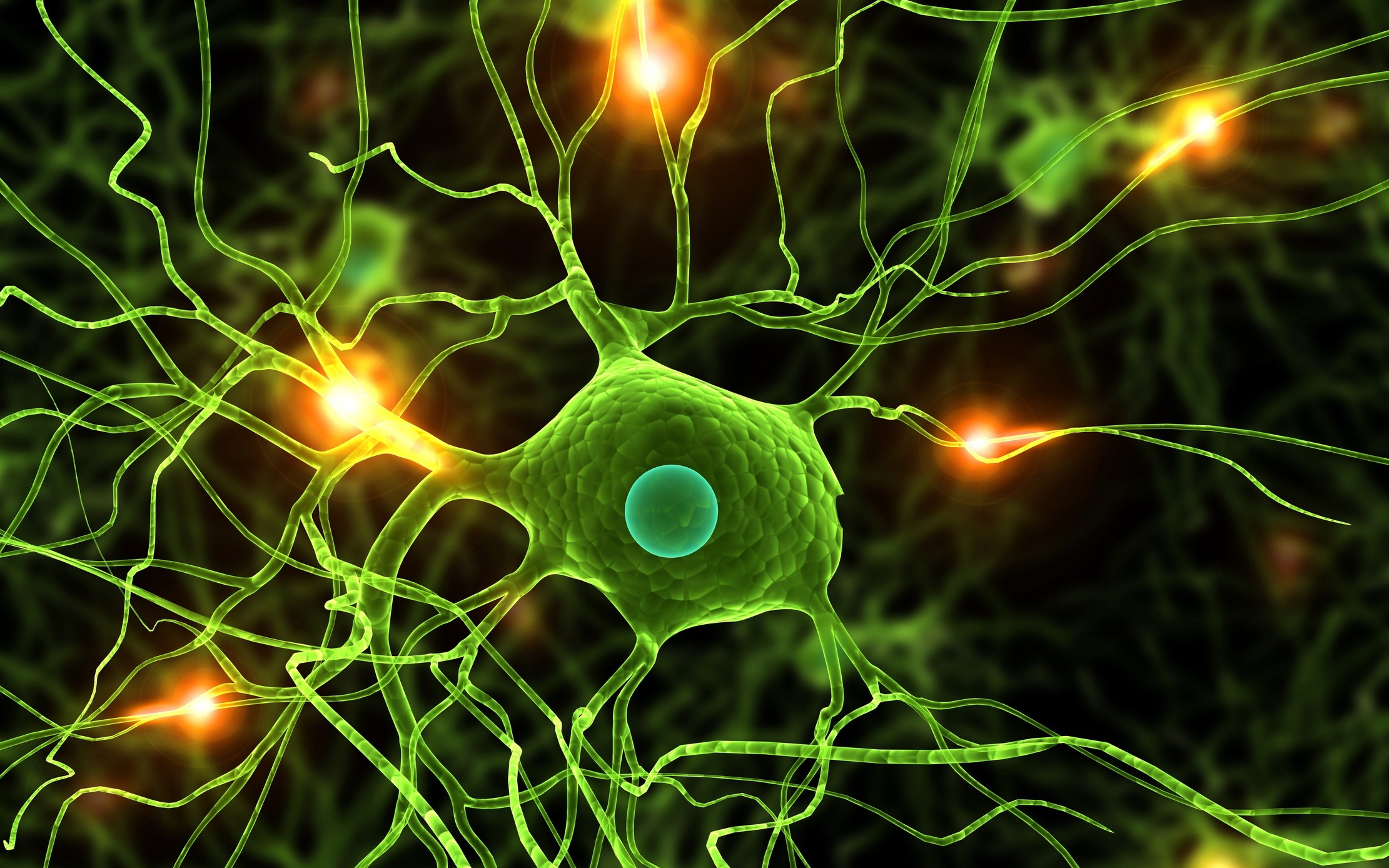 Spine - Anatomy and Neuroscience Photo