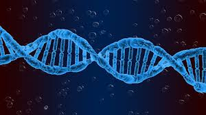 Reproductive Genetics Photo